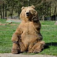 Joe_The_Bear