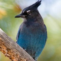 Marty Birdman