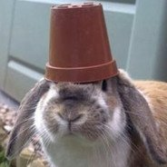 pot head wabbit