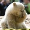 Application: Gentleman207 [... - last post by blind polar bear